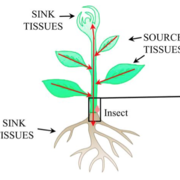 Challenging battles of plants with phloem-feeding insects and prokaryotic pathogens